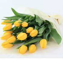 желтые-тюльпаны