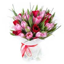 красные-и-розовые-тюльпаны