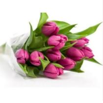 11-розовых-тюльпанов
