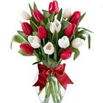 15-красных-и-белых-тюльпанов-osn4
