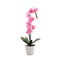 400х400_1688-орхидея
