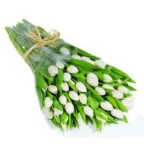35-белых-тюльпанов