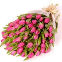 47-розовых-тюльпанов-osn4